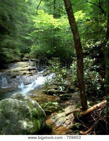 woodswithstream