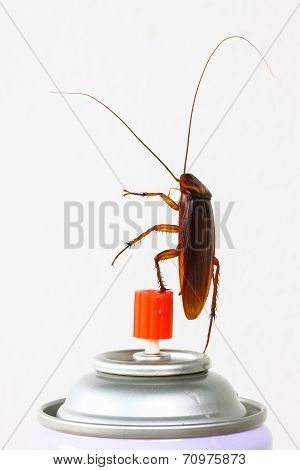 Close up cockroach isolated on white, Roach won pesticides