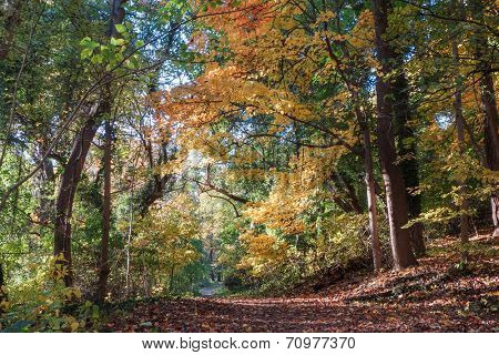 Beautiful Autumn forest in Rock Creek Park, Washington DC - United States