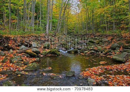 Scenic view of autumn forest and river