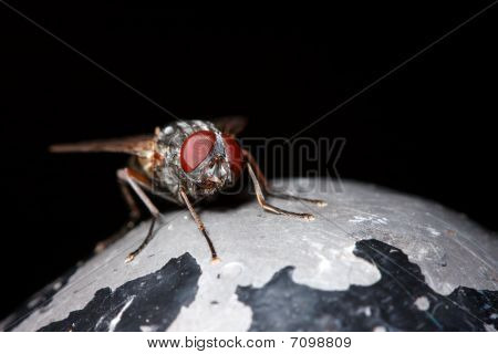 Housefly On Metal Post