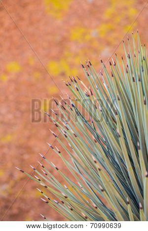 Yucca Detail