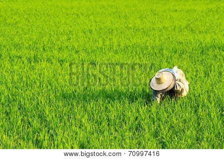 The Thai Farm View