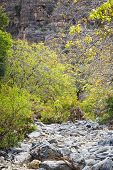 stock photo of jabal  - Image of riverbed Wadi Bani Habib in Oman - JPG