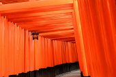 picture of inari  - Thousands of Torii - JPG
