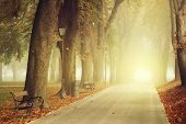picture of fall day  - Park path on a foggy autumn day - JPG