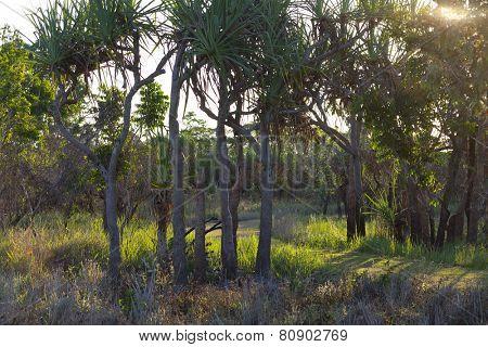 Sundown inTyto Wetlands, Queensland,Australia