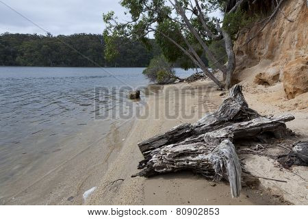 Trunk and trees at the Mallacoota Inlet, Gippsland, Australia