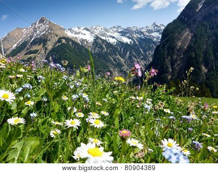 Mountain flower meadow