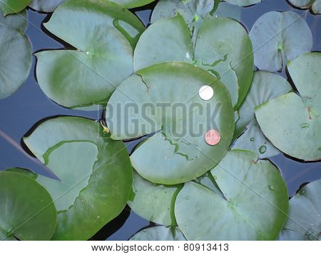 Coins on a lily pad