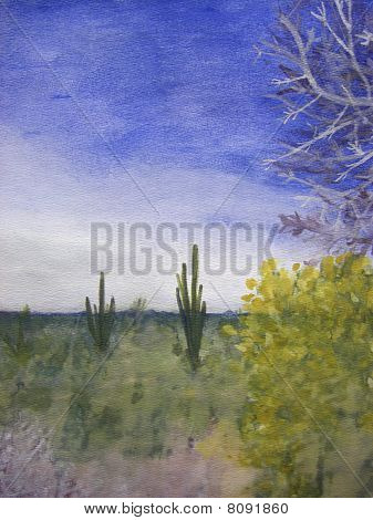 Day In The Arizona Desert