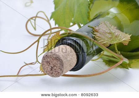 Grape-vine And Bottle