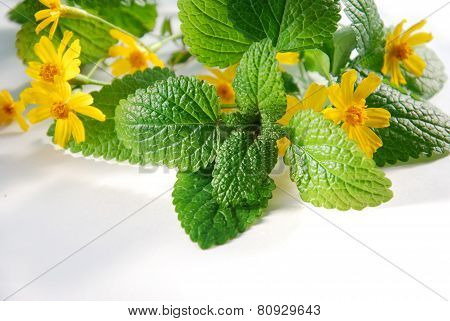 lemon balm and marigold