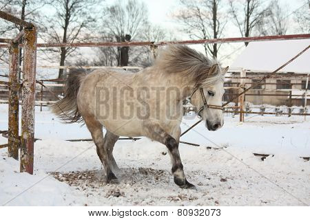 Cute Pony Galloping In The Snow