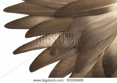 Gray Feathers