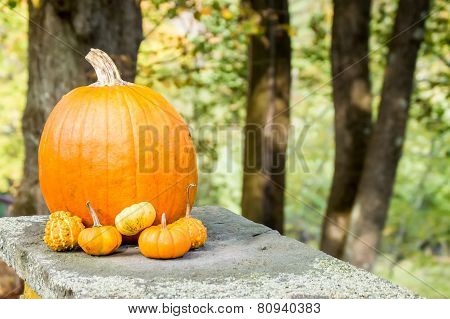 Pumpkin And Gourd Arrangment Outdoors In A Woodsy Setting