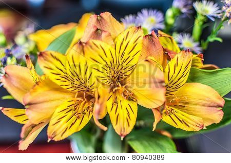 Closeup Of A Flower Arrangement Featuring Alstroemeria Aurea