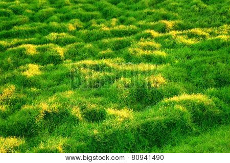 Green Grassy Slope