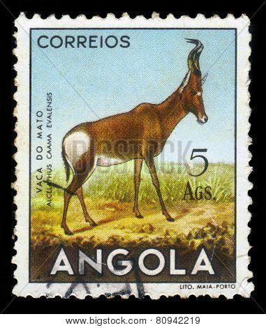 Red Hartebeest, Antelope