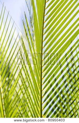 Close Up Of Some Palm Tree Leaves With Blue Sky