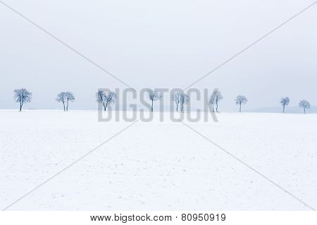 Alley of trees in snow covered landscape