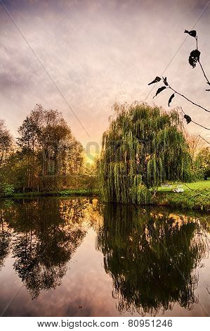 Hdr Shoot Of A Weeping Willow Mirroring In A Pond