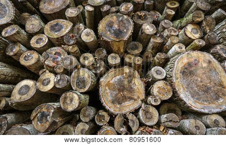 Pile Of Felled Tree Trunks