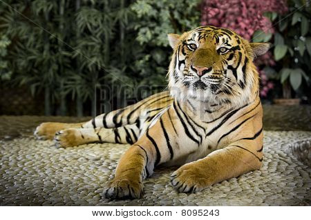 The big tiger