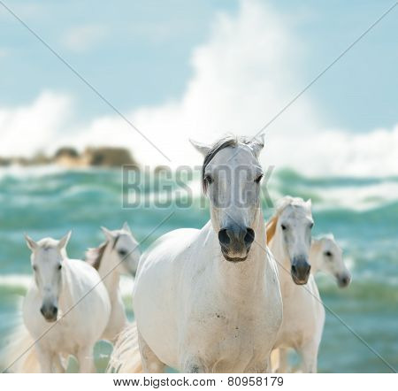 White Horses On The Sea