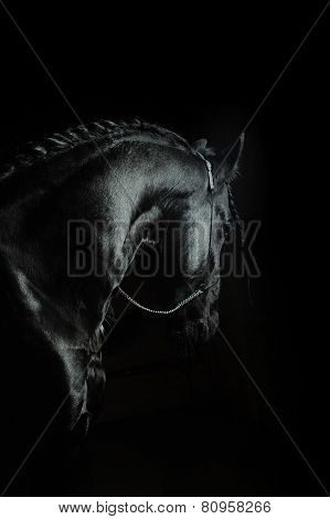 Frisian Horse On A Black