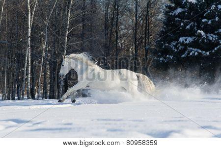 White Horse Runs In Winter