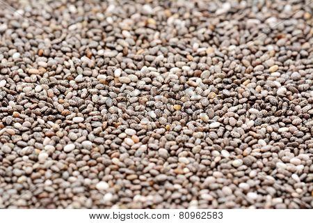 Chia Seeds Macro