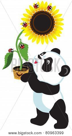 cartoon panda holding sunflower