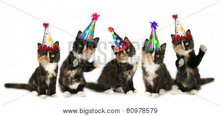 Kittens on a White Background With Birthday Hats