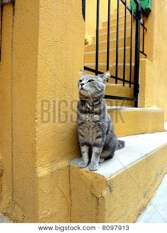 Cat Standing On Stairs