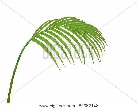 Tropical Plant leaf