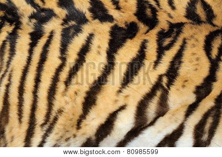 Beauty Of Real Tiger Fur