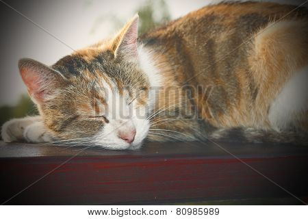 Lazy Cat Instagram Effect