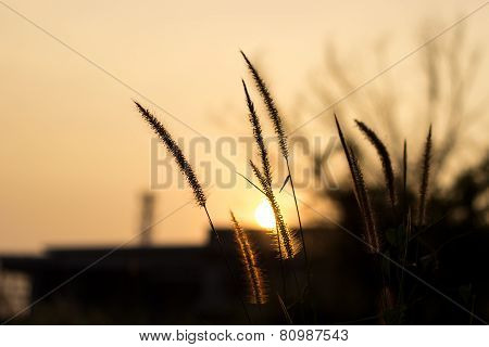 Grass Sunset Background