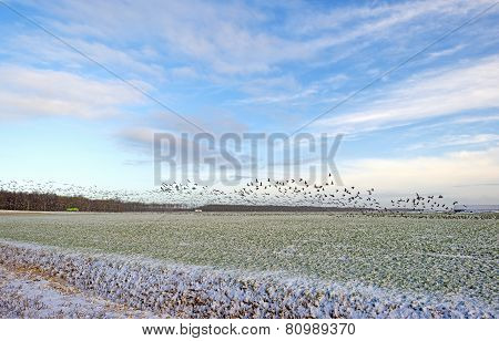 Flock of geese flying over a snowy field in winter