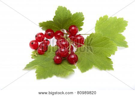 Red Currant Berries Lying On The Leaves Of Currants On A White Background.