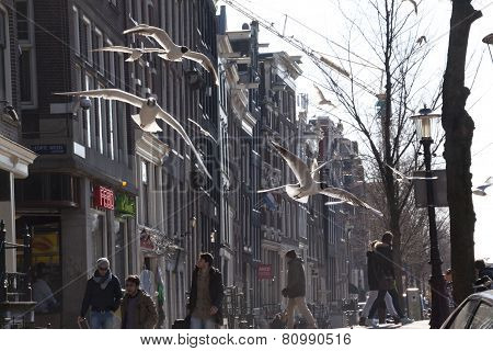 Flying Sea Gull In Amsterdam