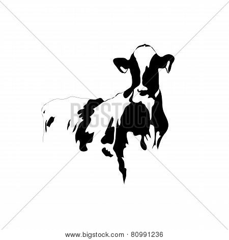 Abstraknie Picture Black And White Cow