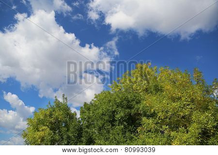 Big Green Tree Crown With Blue Sky
