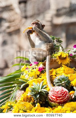 Annual Monkey Buffet Festival