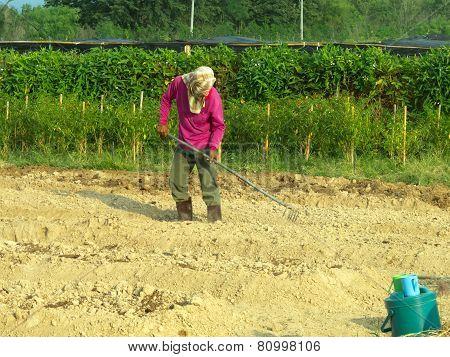 A Man Cultivating In Farm.