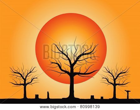 Dead Tree and Sun