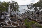 stock photo of inlet  -  Roots and trees at the Mallacoota Inlet - JPG