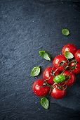picture of basil leaves  - Cherry tomatoes on the vine with basil leaves - JPG