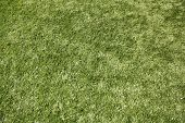 picture of substitutes  - Artificial grass  - JPG
